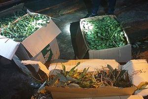 Hà Tĩnh: Bắt giữ xe khách chở gần 70 kg quả thuốc phiện qua biên giới