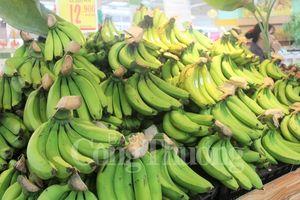 Huế: Chuối già lùn A Lưới được đưa vào hệ thống siêu thị Big C