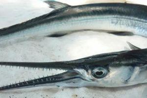 Đến Nam Du nhớ thử món ngon của lạ cá 'sát thủ' xương xanh
