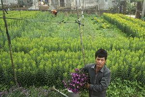 Cắt hoa và chăm sóc hoa thế nào là đúng cách?