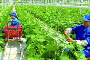Bộ NN-PTNT quyết liệt tái cơ cấu doanh nghiệp nhà nước