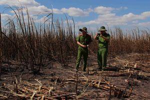 Điều tra nguyên nhân hơn 100 héc ta mía đang cho thu hoạch bị thiêu rụi