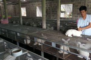 Kinh nghiệm của người nuôi thỏ Newzealand, lãi 12 triệu/tháng