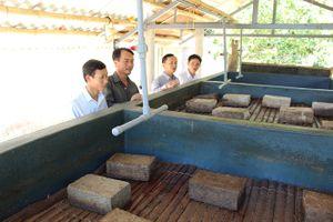 Sản xuất nước mắm bằng phương pháp phơi kín