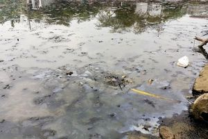 Người dân đã trở về nhà sau sự cố tràn dầu ở Thanh Hóa