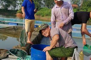 Làm ăn lạ: Nuôi cá chuối hoa trong lồng, bán giá cao, thu lãi khủng