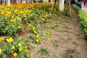 Bí thư Thành ủy Hà Nội: Tăng xử phạt việc dẫm hoa, xả rác