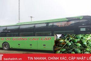 Phát hiện 9 kg quả thuốc phiện tươi trên xe khách từ Hà Tĩnh đi Hà Nội