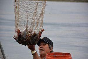 Hiệu quả mô hình nuôi cá lăng nha