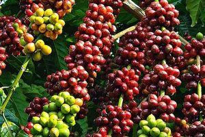 Công bố 13 sản phẩm nông nghiệp chủ lực