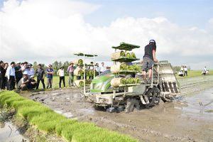 Kiên Giang: Nông dân tham gia Dự án VnSAT giảm chi phí, tăng lợi nhuận