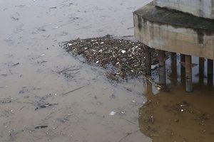 Sông Hồng ngập trong củi rác những ngày cuối năm