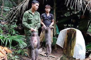 Bắt 5 người đàn ông săn voọc xám quý hiếm ở vườn quốc gia Pù Mát
