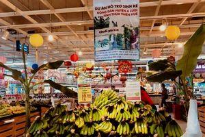 Chuối già lùn A Lưới TT- Huế lên kệ siêu thị