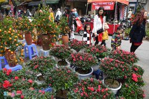 Hà Nội tổ chức 64 chợ hoa xuân