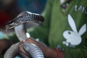 Bị rắn 'thần' cắn, người đàn ông trở nên khác thường