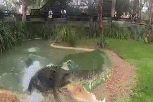 Xem cá sấu 'khủng' dài 5m, nặng 9 tạ nghiền nát xương trong chớp nhoáng