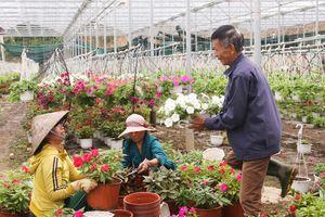 'Vương quốc hoa kiểng' khắp miền vào mùa Tết - Kỳ 4: Tỉ phú hoa Vân Dương