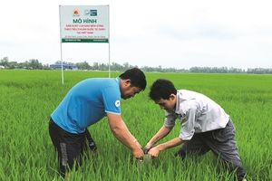 Lộc Trời theo đuổi gạo SRP có rủi ro?
