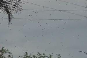 Rợn người cảnh hàng trăm con nhện lơ lửng trên bầu trời