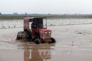 EVN đảm bảo cấp nước cho gieo cấy vụ Đông Xuân