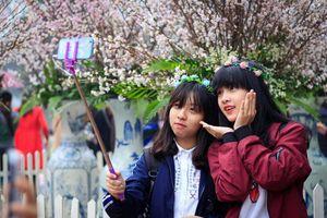 Hà Nội có 64 chợ hoa xuân Tết Nguyên đán 2019