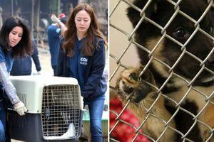 Phẫn nộ: Tổ chức bảo vệ động vật lớn nhất Hàn Quốc bí mật thủ tiêu hàng trăm con chó