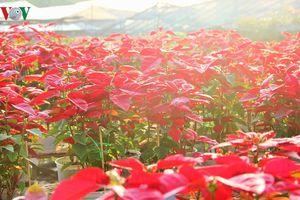 Sắc Xuân tràn ngập làng hoa Sa Đéc