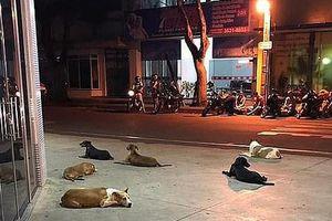 Xúc động 6 chú chó chạy theo chủ đi cấp cứu và thức trắng đêm canh gác