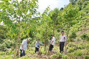Ứng dụng tiến bộ kỹ thuật trồng rừng gỗ lớn