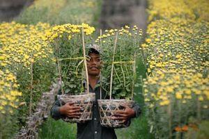 Thành phố Mỹ Tho sẽ cung ứng gần 1,1 triệu giỏ hoa Tết ra thị trường