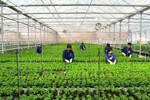 Đà Nẵng: Nhiều chính sách hỗ trợ sản xuất nông nghiệp hữu cơ