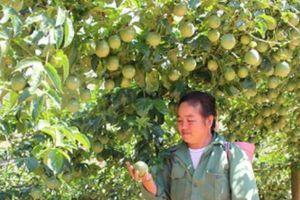 Khởi sắc nông thôn mới ở xã biên giới Phiêng Khoài