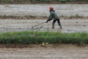Quảng Bình: Gần 80 ha đất lúa 'khát' nước