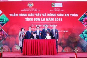 Giới thiệu sản phẩm dâu tây Sơn La tại Hà Nội