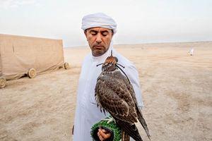 Huấn luyện chim ưng: Nghề kiếm ra hàng triệu USD ở Trung Đông