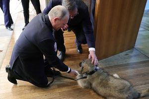 Tổng thống Putin nhận món quà đặc biệt từ Serbia