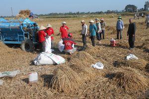Thuê ruộng làm lúa giúp người nghèo