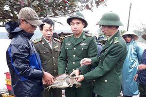 Thả cá thể rùa có tên trong sách đỏ về với thiên nhiên