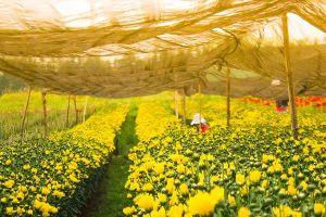 Làng hoa ven Sài Gòn: Dân đầu tư lớn, thuê người tưới nước, tỉa cây