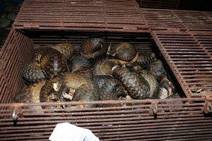Phá đường dây mua bán, vận chuyển động vật hoang dã cực lớn tại Hà Tĩnh