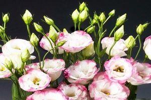 Ý nghĩa bất ngờ của 9 loài hoa chơi Tết đuổi tà khí, hút tài lộc cho gia chủ