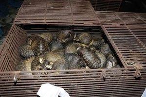 Danh tính các 'đại gia hàng con' bị bắt trong vụ buôn động vật hoãng dã