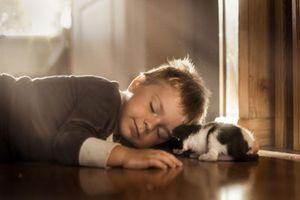 Mê mẩn bộ ảnh mèo và cậu chủ nhỏ đẹp đến ngẩn ngơ
