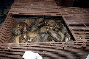 Hà Tĩnh: Triệt phá băng nhóm nuôi nhốt, buôn bán trái phép động vật quý hiếm