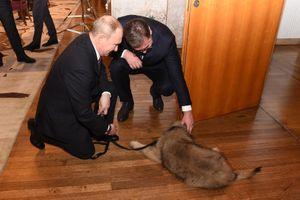 Tin ảnh: Putin rất thích nuôi chó