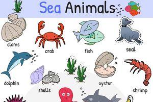 Từ vựng tiếng Anh về các loài sinh vật biển