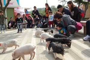 Bảo tàng Lợn tại Hàn Quốc hút khách tham quan dịp năm mới 2019