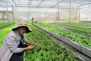 Nhật Bản hỗ trợ Việt Nam phát triển lĩnh vực nông nghiệp