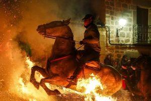 Những con ngựa 'tẩy mình' bằng lửa trong lễ hội ở Tây Ban Nha